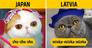Different Languages Meme - how people call to a cat in different languages likeworld