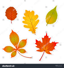 autumn set leaves stickers shadows oak stock vector 210079186