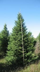 e u0026e trees inc