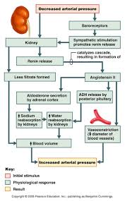 Endocrine System Concept Map 194 Best Mcat Breakdown Bio Images On Pinterest Ap Biology