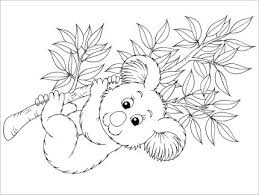 koala bear coloring page koala bear coloring pages gianfreda 72351 gianfreda net