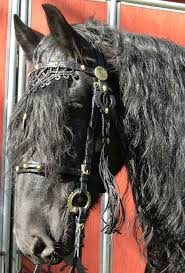 77 best other tack images on tack