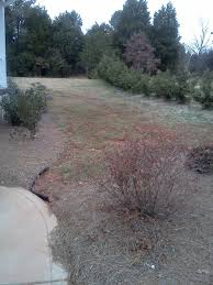 dry creek bed u0026 sod costs flower landscaping growing grass
