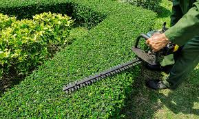 shrub pruning seasonal care ornamental trees city pa