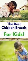 Best Backyard Chicken Breed by Best 25 Chicken Breeds Ideas On Pinterest Hens Chicken Coops