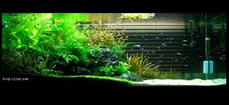 How To Aquascape A Planted Tank Asymmetrical Aquascape Dream Freshwater Aquarium Pinterest Large