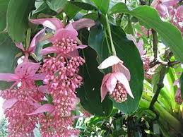 the 25 best garden ideas in the philippines ideas on pinterest