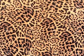 texture of print fabric striped leopard for background stock photo