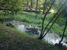 delle codroipo diario di bordo un malamute al parco delle risorgive codroipo