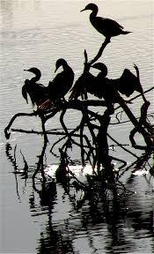 halloween black birds creature from the black lagoon halloween edition santa monica