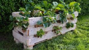 Gardening Trends 2017 Summer Garden Trends 2017 Your Valley News