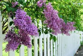 Very Fragrant Plants Scented Garden Flowers Choosing Plants That Smell Good