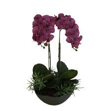 Orchid Plants Important Of Ornamental Plant Artificial Orchid Plants Cymbidium