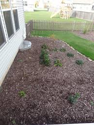 landscaping ideas for backyard privacy cont back of house facing