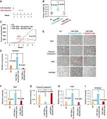 lncrna wires up hippo and hedgehog signaling to reprogramme