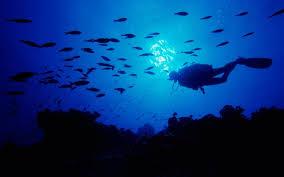 scuba diving wallpapers 58 images