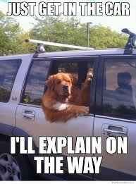 Dog In Car Meme - just get in the car weknowmemes