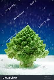 romanesco broccoli christmas tree shape sprinkled stock photo
