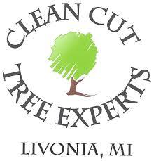 25 beautiful tree experts ideas on expert