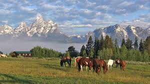 triangle x ranch jackson hole wyoming youtube