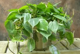 indoor plants that don t need sunlight 7 beautiful indoor plants that don t need sunlight to survive