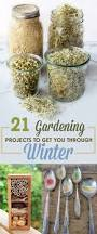 97 best winter gardening images on pinterest winter vegetable