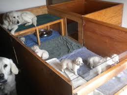 best 25 whelping box ideas on pinterest pregnant dog doggie