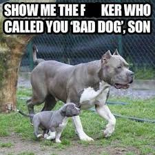 Father And Son Meme - as a pitbull i m going to meme dog and pit bull