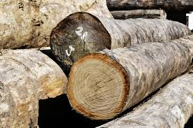 wood log stock image image of manufacturing deforestation 38594751