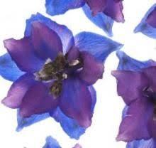 68 best flower festivals home u0026 garden shows images on