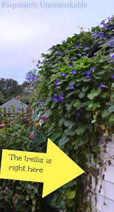 garden trellis design how to train a climbing vine on a trellis exquisitely unremarkable