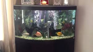 corner fish aquarium 54 gallon corner fish tank ideas for the