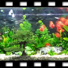 discount plastic plants trees fish tank 2018 plastic plants