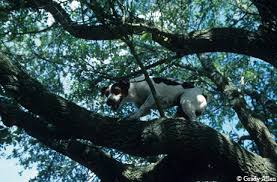 How To Hunt Squirrels In Your Backyard by Squirrel Dogs Aren U0027t Glamorous But They Can Sure Find Small Game