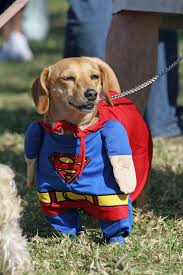 halloween costumes sarasota fl 35 best dog and cat halloween costumes 2017 cute pet costume ideas