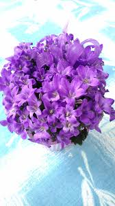 fiori viola immagini luce sole fiore petalo flora fiori viola