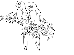 free coloring page of the rainforest tropical rainforest coloring pages drawings pinterest free