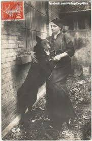 belgian sheepdog guard dog groenendael 1910 old dog pictures pinterest belgian shepherd