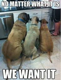 Funny Animals Meme - funny animals with captions picture funny animals funny images and