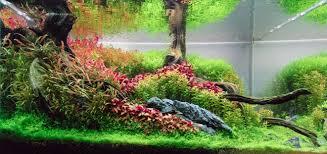 Aquascape Aquarium Designs Planted Tank Contest Aquarium Design Aquascape Awards