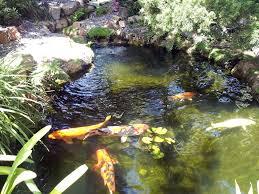 using uv sterilizers in backyard ponds petcha