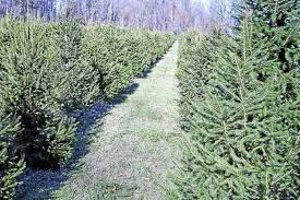 northeast ohio cut your own tree farm guide and map