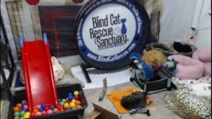 Blind Cat Sanctuary Search Sanctuary Plurk