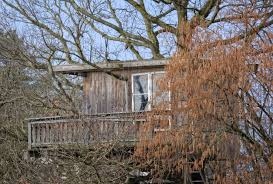 Tree House Home by Free Images Nature Wood House Home Shack Live Cottage