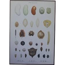 botanical sts vintage 1940s botanical seed chart backe school