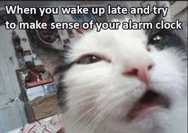 Tuesday Meme - tuesday meme dump december 26 2017 the tango