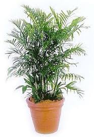 10 air purifying plants for homes u0026 offices drought tolerant