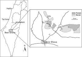 sheva israel map a map of the studied forest and scrub patches of sheva