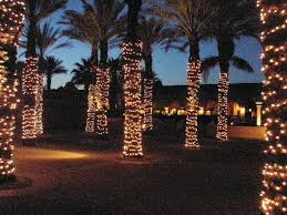 lighted palm trees near pit picture of the westin mission