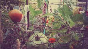 a beginner u0027s guide to organic gardening journey to health